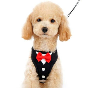 Formal Tuxedo Dog Harness with Bow Tie model dog front view