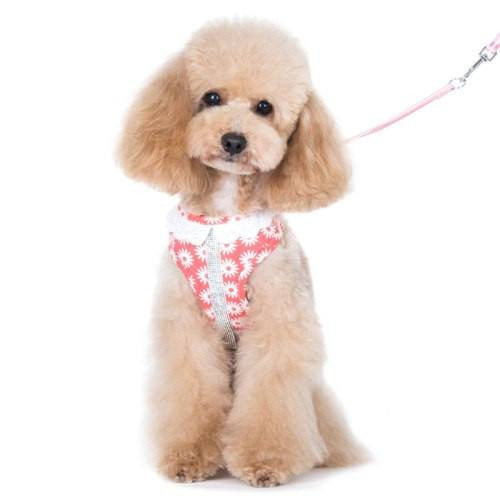 EasyGo harness in floral print with rhinestones model.