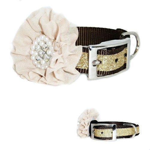 A rich brown dog collar with metallic gold trim and large removable flower.