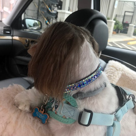 The Flashy Pooch Crystal Jeweled Pet Collar model