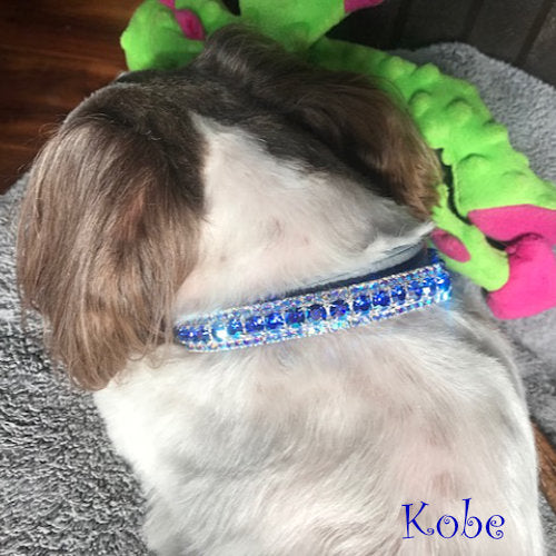 The Flashy Pooch Crystal Jeweled Pet Collar model dog