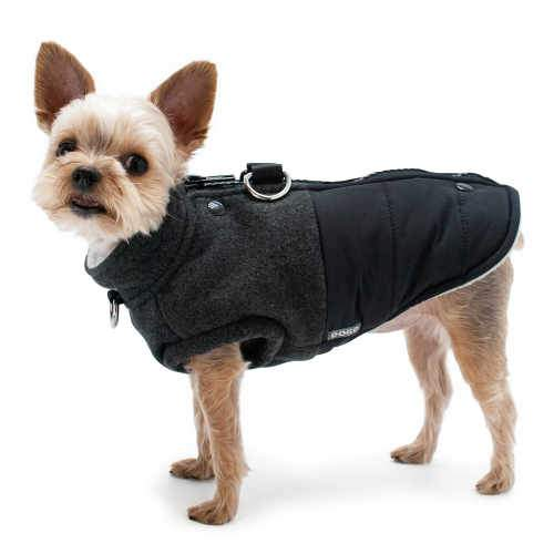 Midtown Stylish Winter Dog Coat dog model
