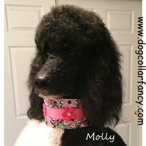 Mod print floral dog collar model.