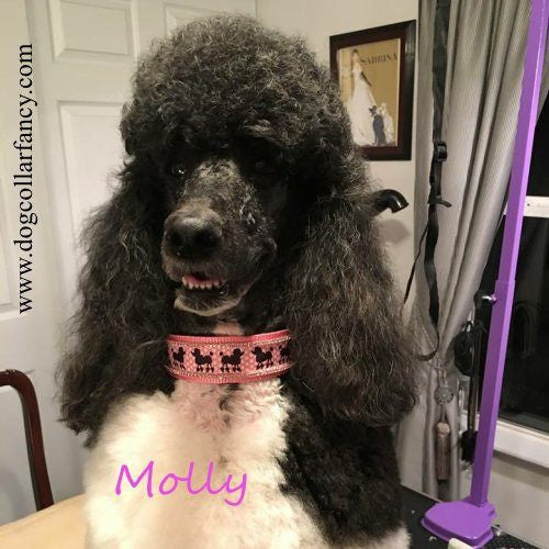Poodle crystal collar model.