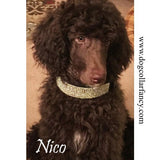 Fancy Black Diamonds 2 Inch Wide Crystal Dog Collar model