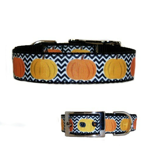 Pumpkin patch dog collar for Thanksgiving and fall.
