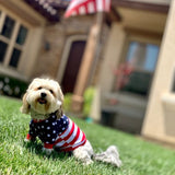 Patriotic Stripes Dog Shirt for small dogs