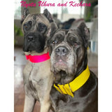 Nyota Uhura and Ketchara big dog collars for every day wear