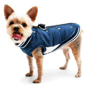 Varsity Winter Dog Coat model dog