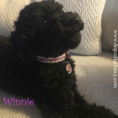 Little miss Winnie in her Kiss Me Pretty fancy dog collar.