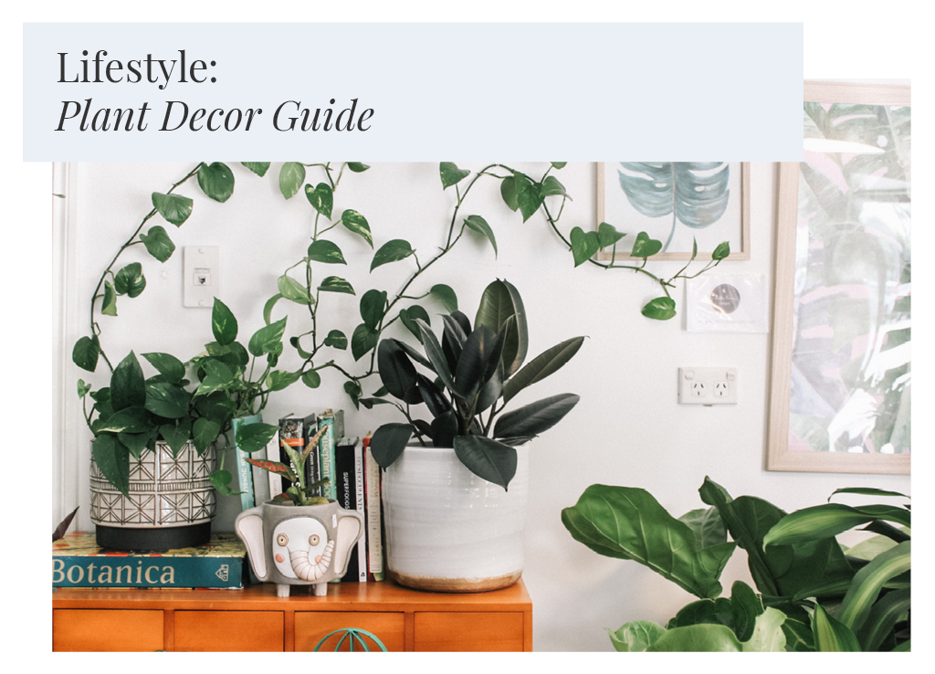 Lifestyle: The Ultimate Plant Decor Guide