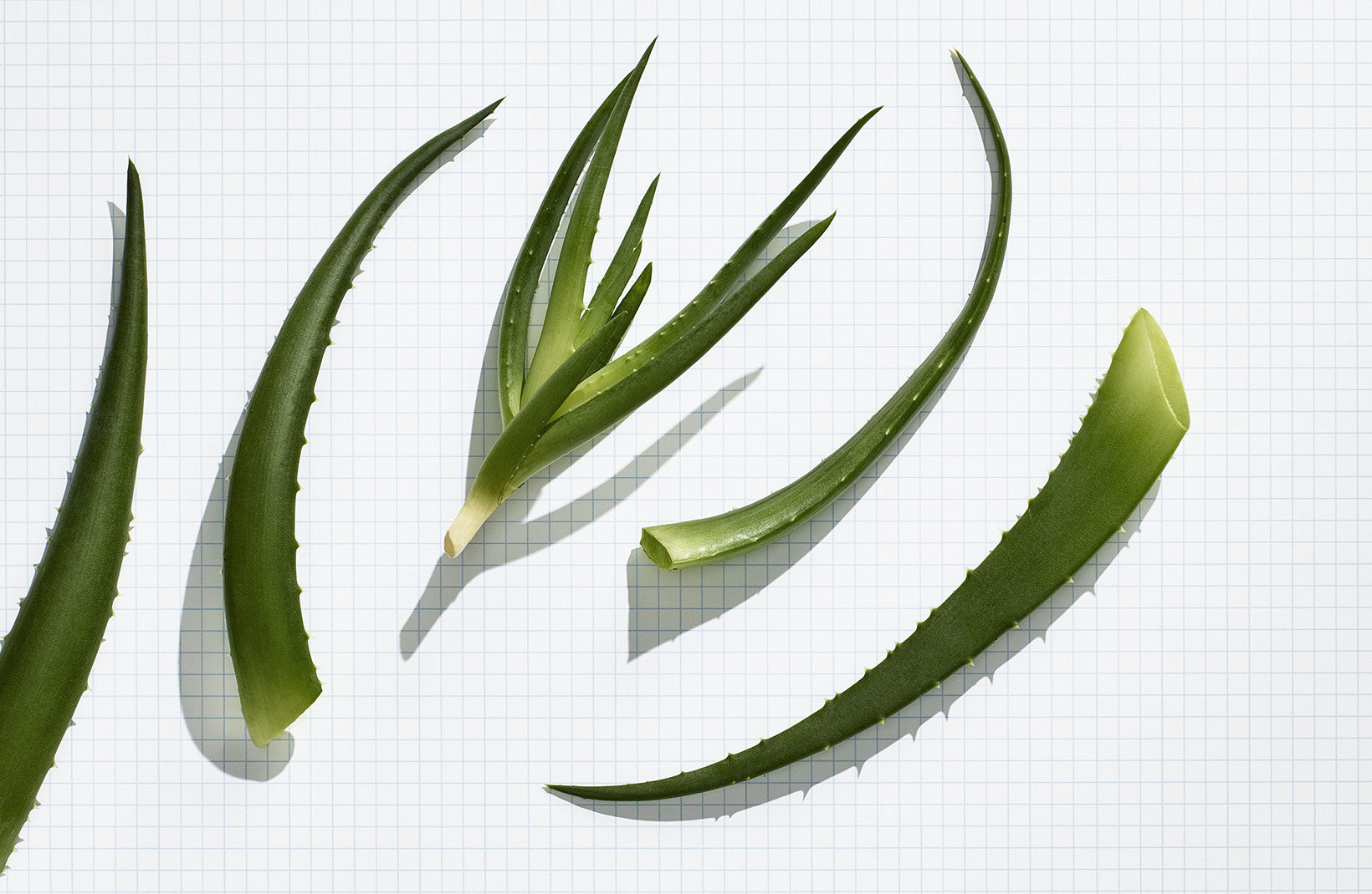 Organic Aloe Vera Mask to Moisturize Dry Hair