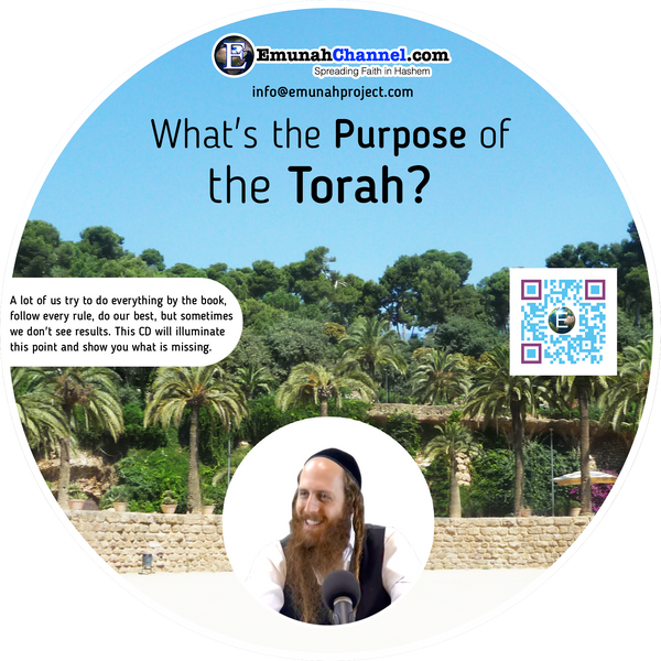 What's the purpose of the Torah? (MP3 Download)