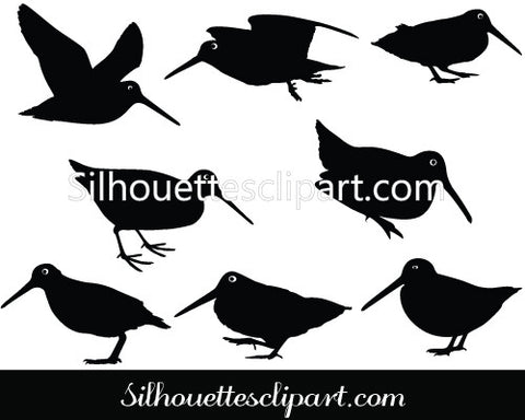 American Woodcock Vector Graphics