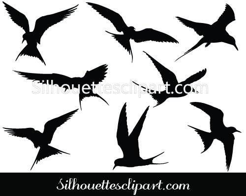 Arctic Tern Vector Graphics