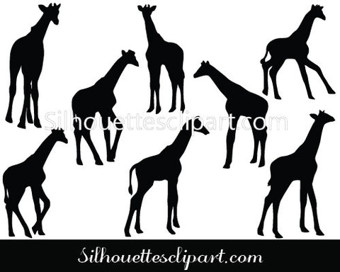 Baby Giraffe Vector Graphics