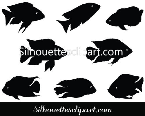 Cichlids Vector Graphics