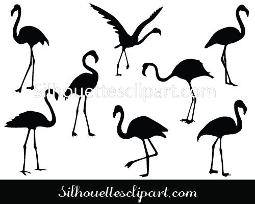 Flamingo Vector Graphics
