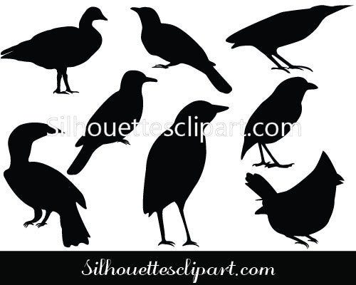 Birds Silhouette Vector
