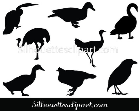 Birds Vector Graphics