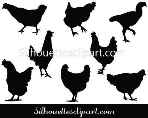 Chicken Vector Graphics