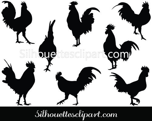 Rooster Vector Graphics