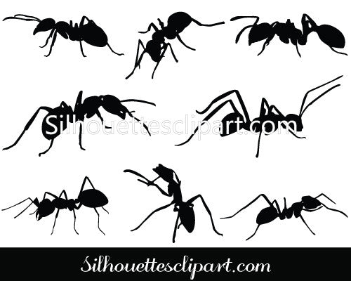 Ant Silhouette Vector Graphics