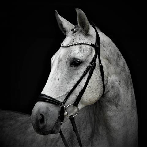 Solo Drop It Like It's Hot - Drop Noseband Bridle