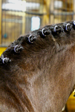 Rhinestone Braid Bling by Spiced Equestrian