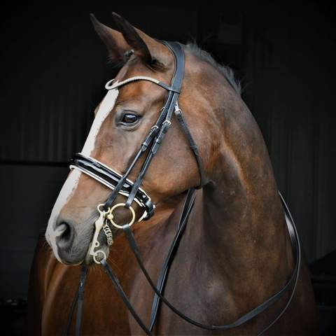 Solo Senterline - Double Bridle