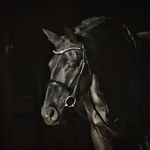 Solo Simplicity - Snaffle Flashless Bridle