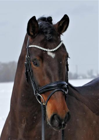 Solo Synergy - Snaffle Bridle