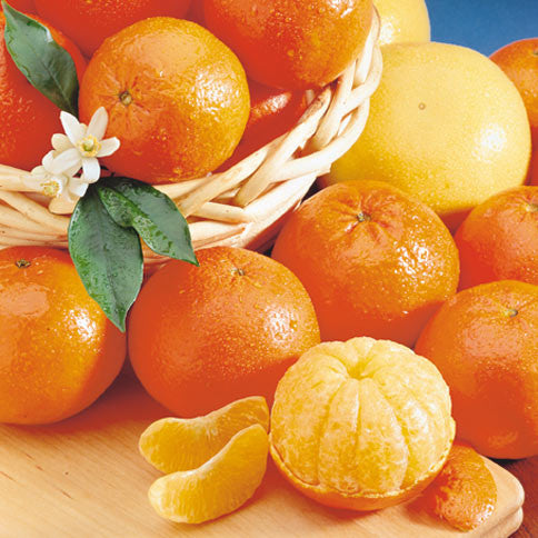 Honey Tangerines and Ruby Red Grapefruit - Orange World