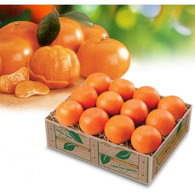 Mandarin Oranges - Orange World