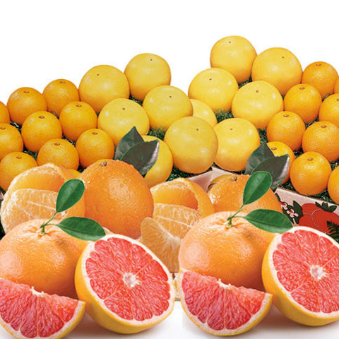 Temple Oranges and Red Grapefruit - Florida Orange World