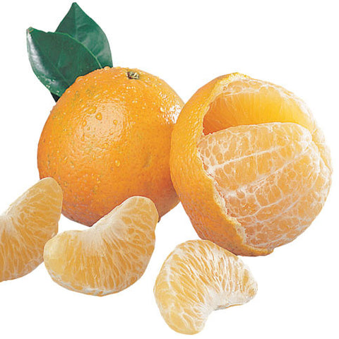 Temple Oranges - Florida Orange World