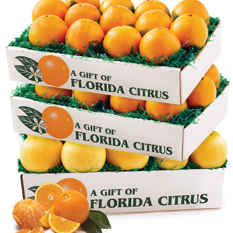 Three Times Delicious - Florida Orange World