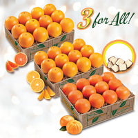 3 For All - Scarlet Red Navels, Golden Navels, Mandarin Oranges - Florida Orange World