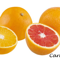 Cara Cara Red Navel Oranges - Florida Orange World