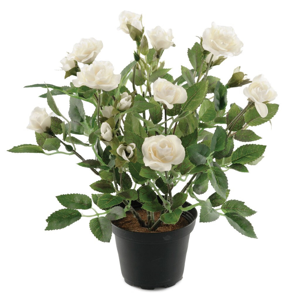 Everlasting Rose Pot White