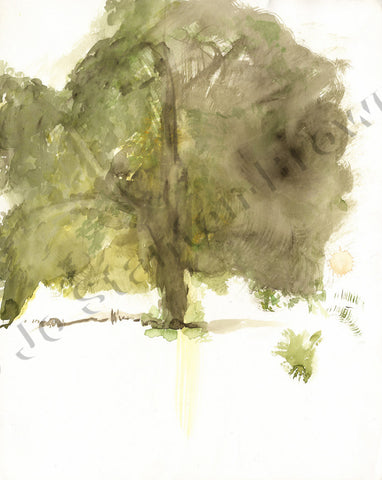 Oak Tree Study Number 5