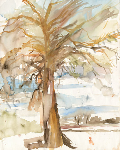 Oak Tree Study Number 3