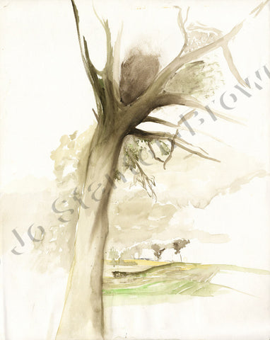 Oak Tree Study Number 1