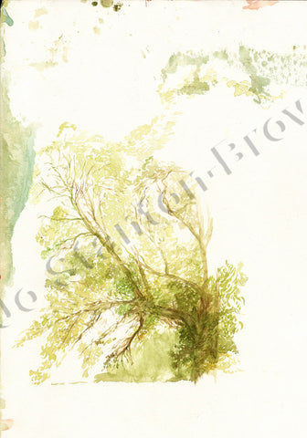 Tree Study in Sap Green