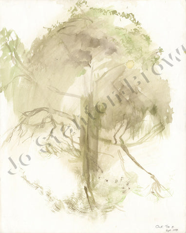 Oak Tree Study Number 4