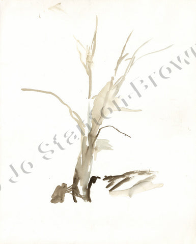 Oak Tree Study Number 7