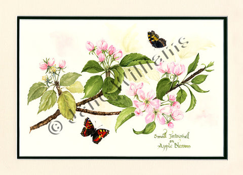 Small Tortoiseshell on Apple Blossom