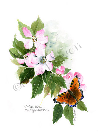 Tortoiseshell on Apple Blossom