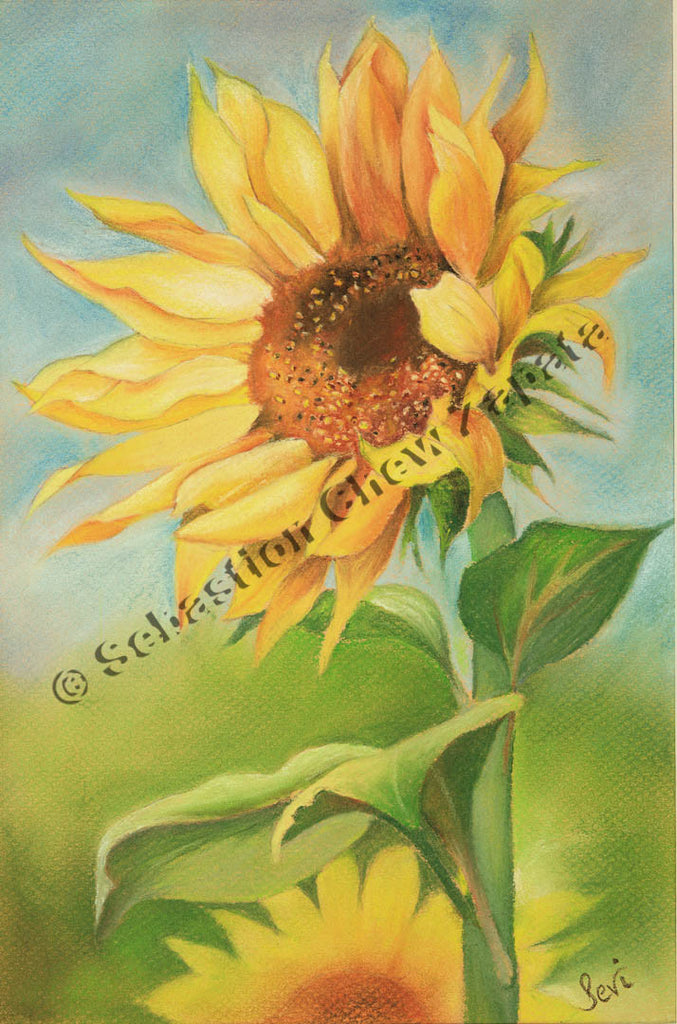 Sunflower Summer 2