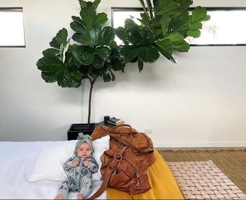 Fiddle Leaf Fig , Bird on the Buffalo Honey Satchel